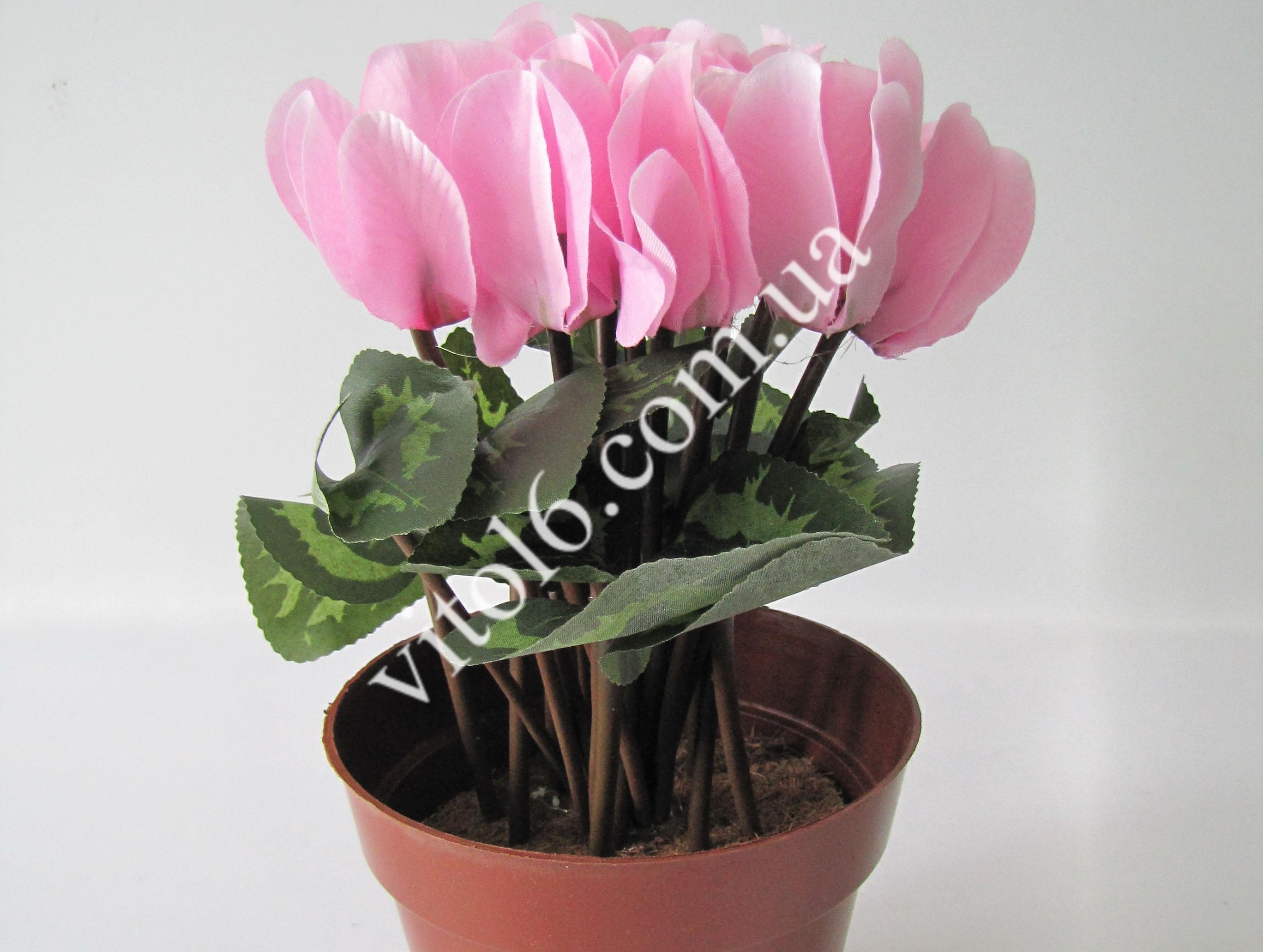 Цикламен розовый VT6-12247  (150шт)
