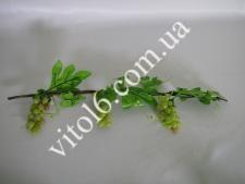 Лоза виноградн.с блестящ,виноградVT6-13961(150шт)